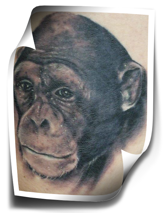 Learn how to portrait tattoo dvd videos for Monkey face tattoo